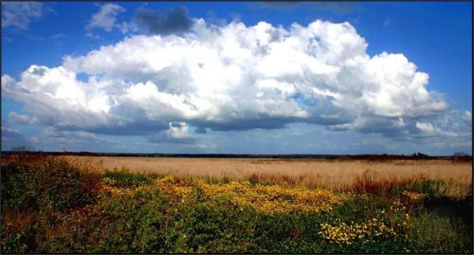 Paynes Prairie