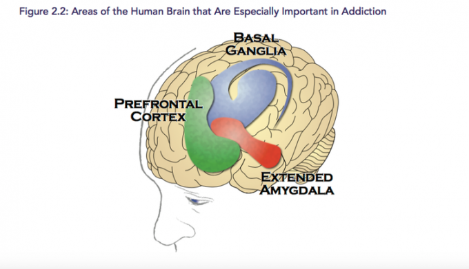 Regions of the brain are affected differently by alcohol. Surgeon General's Report on Addiction